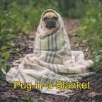 Dog Meme. Cute pug wrapped in a blanket. Caption: pug-in-a-blanket