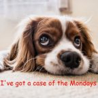 "Sad Cocker Spaniel Meme. ""I've got  case of the Mondays."""
