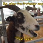 Goat Meme: Goat with surprised look. Caption: Me, when the professor says Pop Quiz