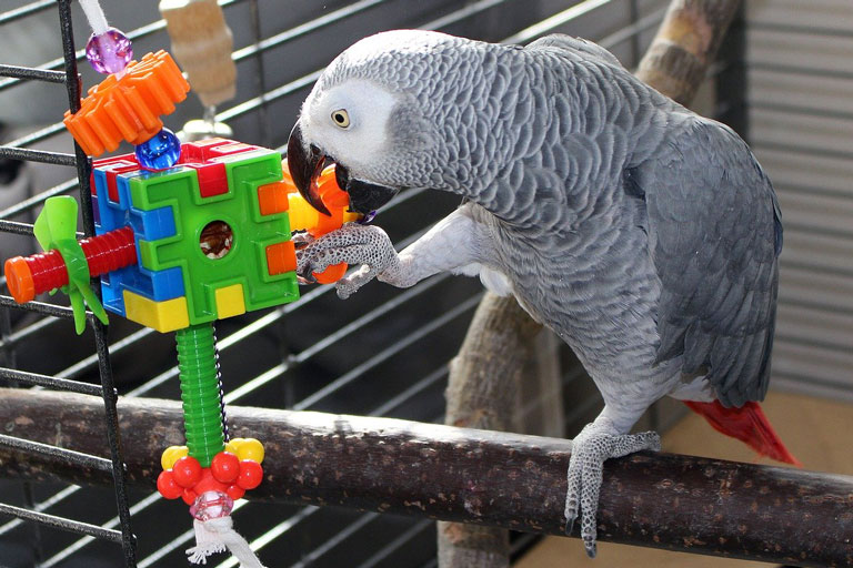 Parrot sitting on a perch playing with plastic toy